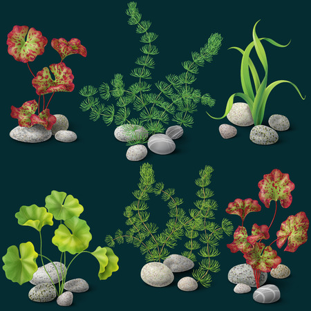Different kinds of algae and pebbles set on dark background.
