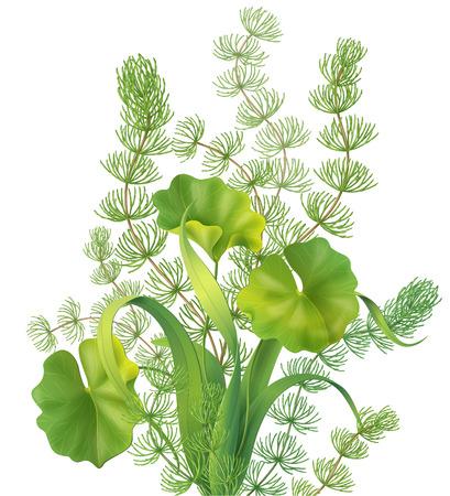 Bouquet de différentes plantes aquatiques isolé sur blanc.