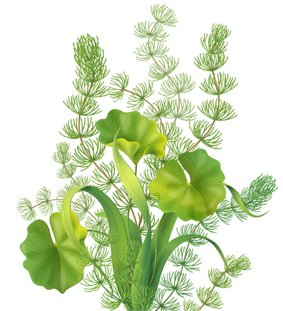 algae: Bunch of different aquatic plants isolated on white. Illustration