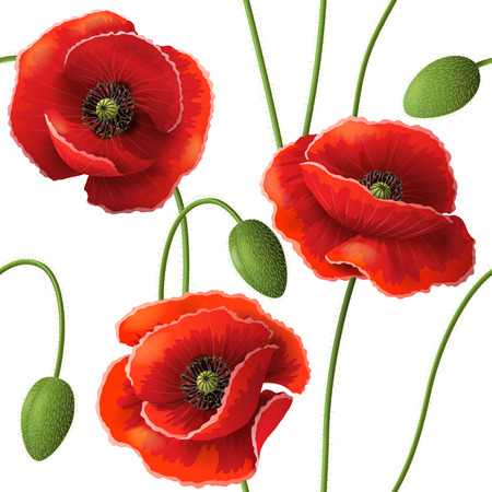 Seamless pattern with red poppy flowers and buds on white. Vettoriali