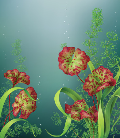aquatic: Underwater background with different aquatic plants and bubbles.