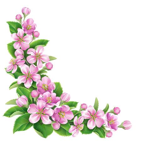 Bloeiende appelboom tak met roze bloemen op wit wordt geïsoleerd.