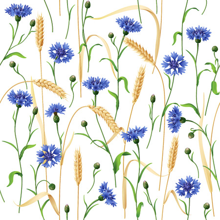 ear bud: Seamless pattern with blue cornflowers and wheat ears  on white.
