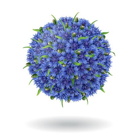 cornflowers: Floral ball of blue cornflowers isolated on white. Illustration