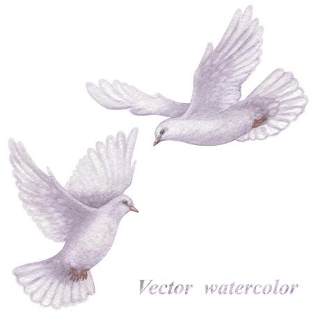 白い背景上に分離されて飛行ハトの水彩画のペア。