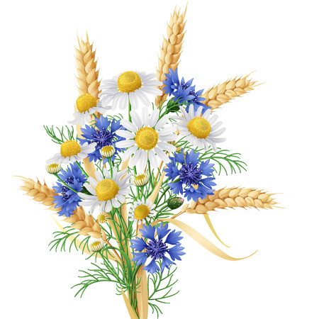 Bunch of  wild chamomile, blue cornflowers and wheat ears. Illustration