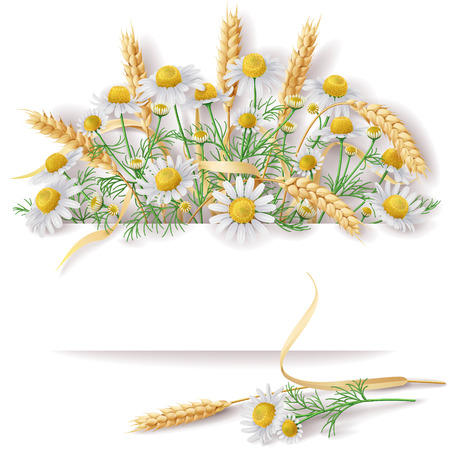 ears: Bunch of  wild chamomile flowers and wheat ears  with space for text.