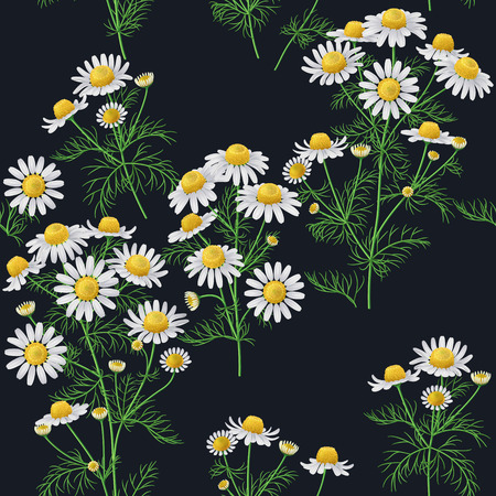 bunches: Seamless pattern with wild chamomile bunches on dark background.