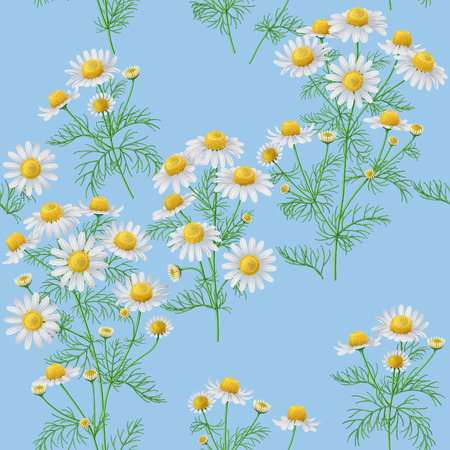 bunches: Seamless pattern with wild chamomile bunches on blue background.