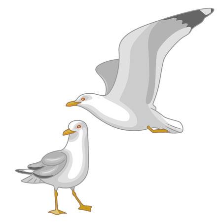 mew: Simplified image of flying  and walking seagulls isolated on white.