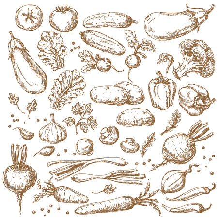 tomate: L�gumes Set. Croquis de tomate, concombre, carotte, brocoli, pommes de terre, aubergines, champignons, l'oignon, la betterave, radis, le poivron et la laitue.