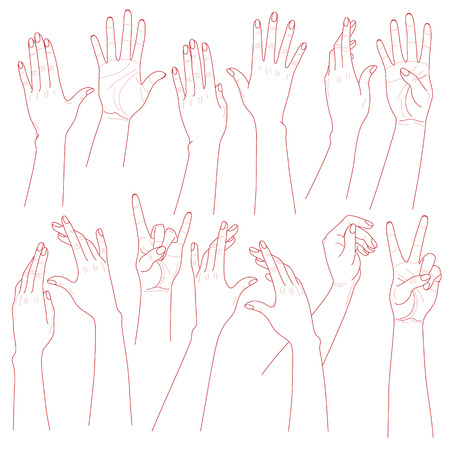 position: Outlines set  of woman  hands  on white background.