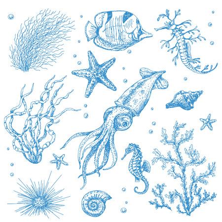 calamares: Un conjunto de plantas y animales bajo el agua. Bosquejo drenado mano de estrellas de mar, conchas, calamares, peces, hipocampo y algas.