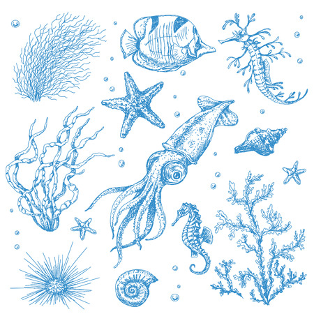 A set of underwater plants and animals. Hand drawn sketch of starfish, shells, squid, fish, hippocampus and algae.