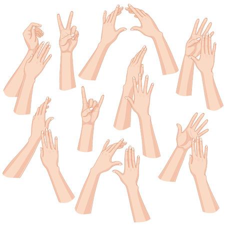 Conjunto de manos de la mujer aislados en el fondo blanco. Ilustración de vector