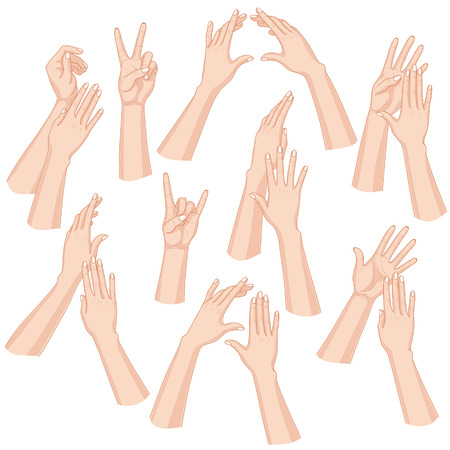 Set of woman hands  isolated on white background.