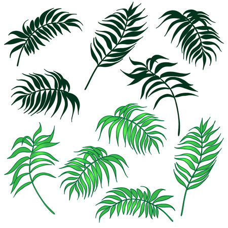 a drawing: Set of colored palm leaves and silhouette leaves isolated on white.