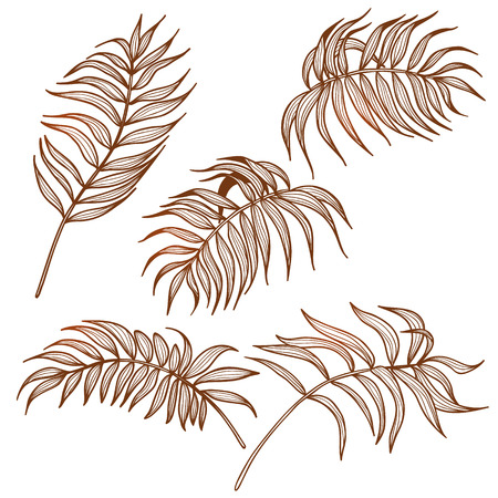 palm of hand: Set of hand drawn palm leaves isolated on white. Tattoo design. Illustration