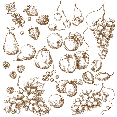 plums: Fruits Set. Hand drawn sketch of apple, pear, grape, quince, plum, apricot, cherry and berries.