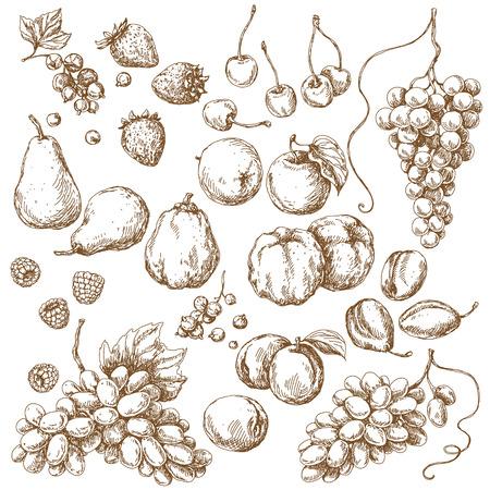 pera: Frutas CONJUNTO. Bosquejo drenado mano de manzana, pera, uva, membrillo, ciruela, albaricoque, cereza y bayas.