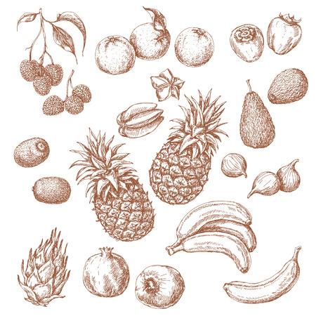 frutas tropicales: Frutas Tropicales Set. Bosquejo drenado mano de litchi, granada, naranja, plátano, dragonfruit, higo, kiwi, caqui, carambola, aguacate y piña.
