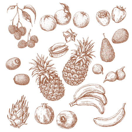 fig: Tropical Fruits Set. Hand drawn sketch of lychee, pomegranate, orange, banana, dragonfruit, fig, kiwi fruit, persimmon, starfruit, avocado and pineapple. Illustration