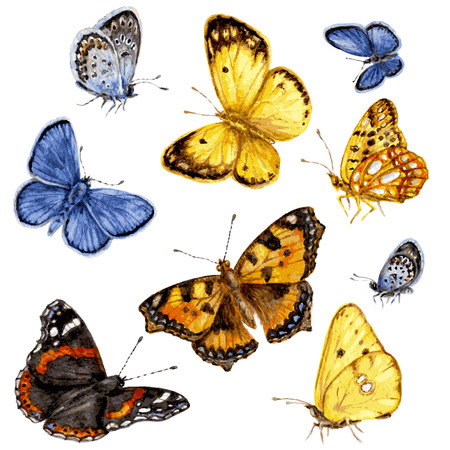 Set of colored butterflies. Hand drawn watercolor image of flying and  sitting butterflies. Ilustração