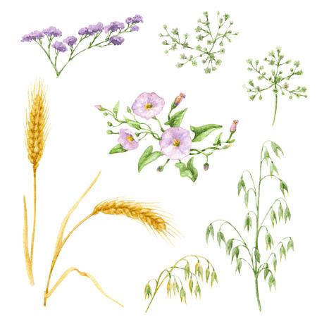 Elementos de la acuarela de flores silvestres y cereales aisladas sobre fondo blanco. Conjunto floral. Foto de archivo - 44701503