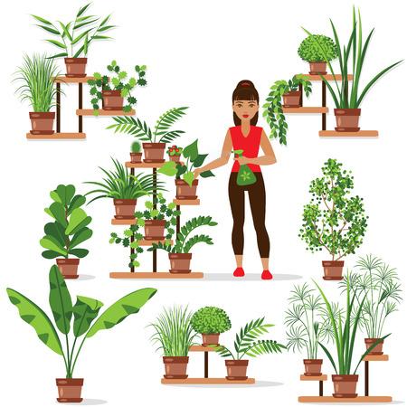 regar las plantas: Conjunto de varias de las plantas en macetas en las estanterías y stands. La muchacha está cuidando de las plantas de interior.