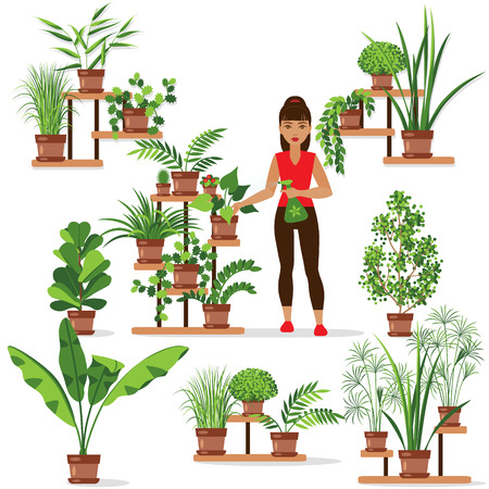 Set of various of  potted plants on the shelves and stands. Girl is caring for houseplants. Ilustracja