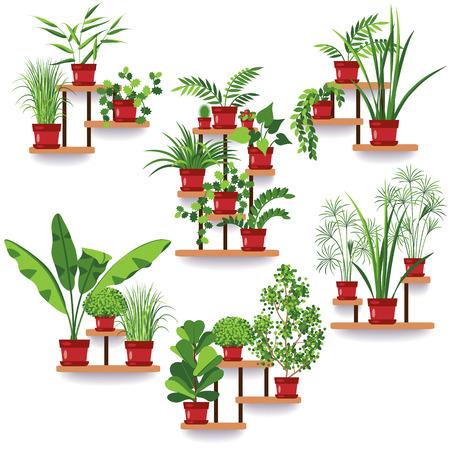 棚や、壁に掛かっているスタンド上の鉢植えな植物の各種セットです。マンションのデザイン。部屋の緑化のためのアイデア。