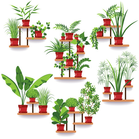 plant stand: The set of various of potted plants on the shelves and stands hanging on the wall. Apartment design. Idea for greening of the room.