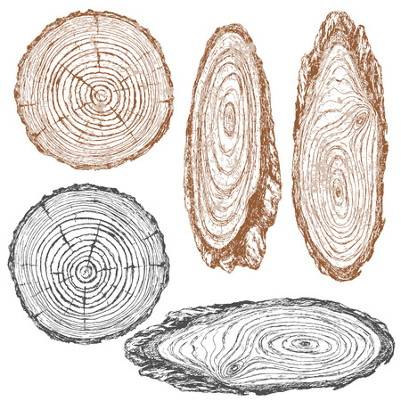 Round and oval cross section of tree trunk. Wooden texture with tree rings.  Hand drawn sketch. Vectores