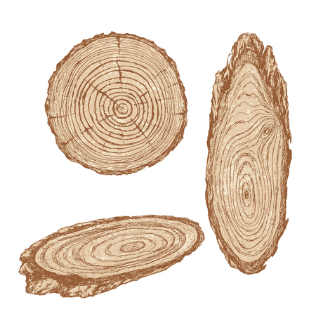 tree cross section: Round and oval cross section of tree trunk. Wooden texture with tree rings.