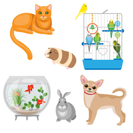 Set of pets and other animal companions. Cat, dog, rabbit, guinea pig, budgies in the cage and aquarium with fishes  isolated on white.