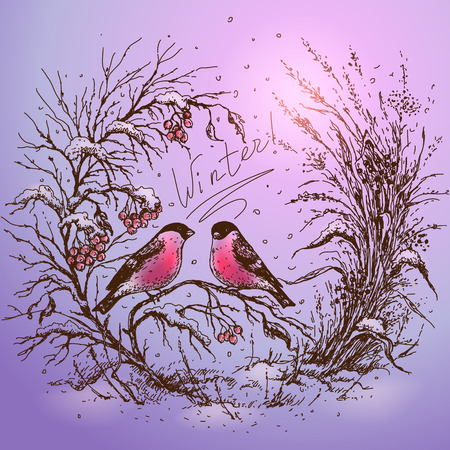 viburnum: Hand drawn colored illustration with two bullfinches sitting on branch of viburnum, dried herbs and falling snow. Expression inscription winter is in the center of image.