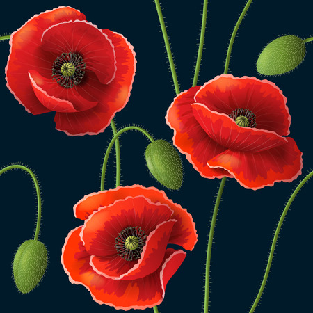 Seamless pattern with red poppy flowers and buds on dark. 일러스트