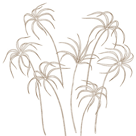 carex: Set of hand drawn tsiperus leaves isolated on white.