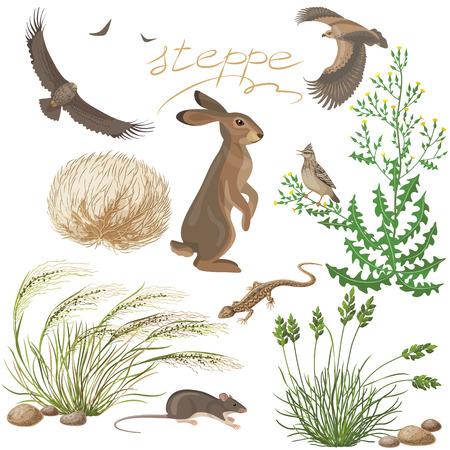 lizard in field: La flora y fauna de la zona de la estepa. El Conjunto de plantas y animales de la estepa aislado en blanco.