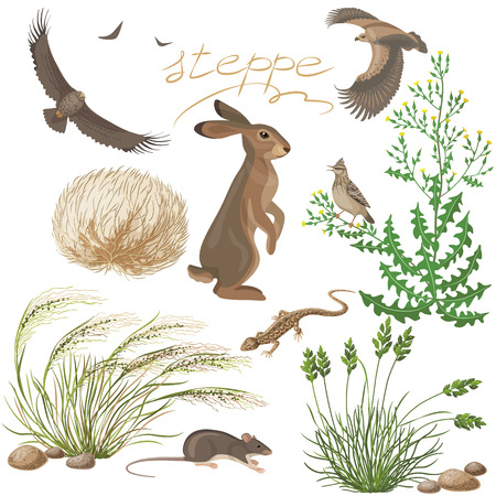 Flora and fauna of the steppe zone. The Set of  steppe plants and animals isolated on white. Illustration