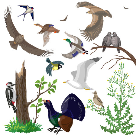 Set of different wild birds isolated on white. Simplified images of birds of prey, waterfowl and migratory songbirds.
