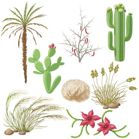 plantas del desierto: El Conjunto de plantas de la estepa y el desierto aislado en blanco.
