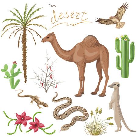 animales del desierto: Conjunto de plantas del desierto y animales imágenes aisladas en blanco.