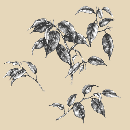 vintage flower: Hand drawn set of branches and leaves of tropical plants.