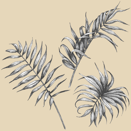 black and white leaf: Hand drawn branches and leaves of tropical plants. Illustration
