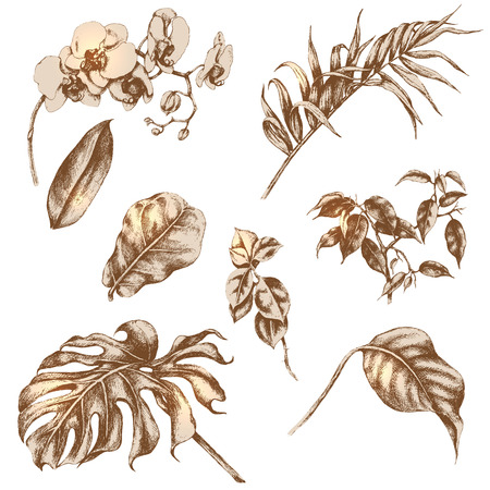 tropical plants: Hand drawn branches and leaves of tropical plants. Illustration