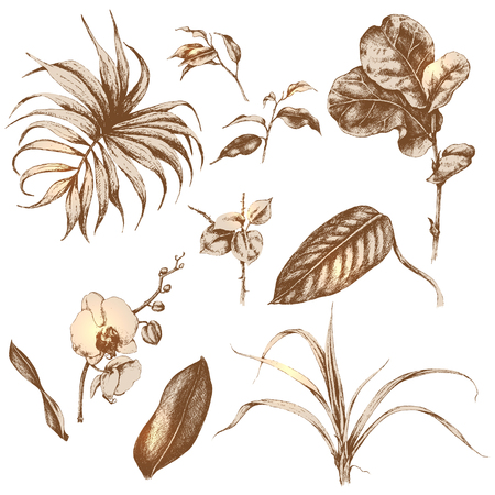 Hand drawn branches and leaves of tropical plants. Illustration