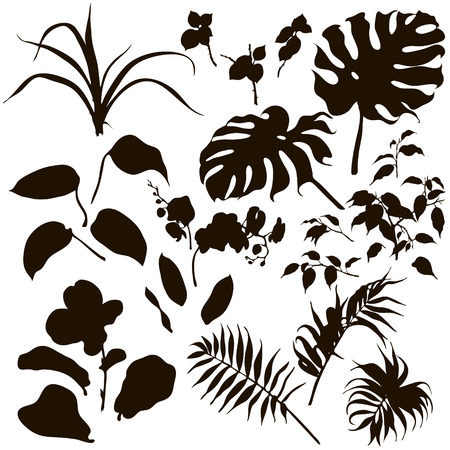 monstera leaf: Hand drawn branches and leaves of tropical plants. Set of tropical plants silhouette. Illustration