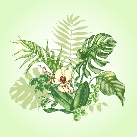 frond: Hand drawn branches and leaves of tropical plants. Bouquet with Orchid flower.