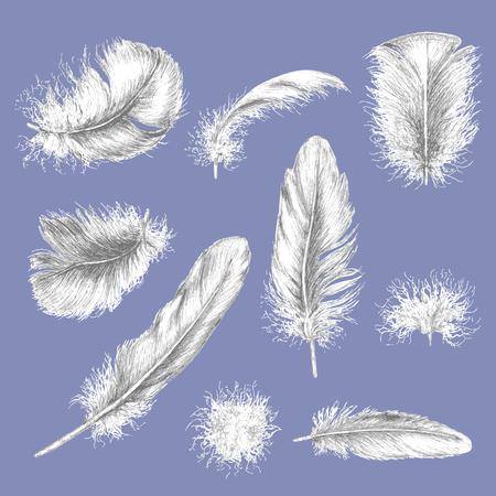 様々 な羽の手描きのセットです。